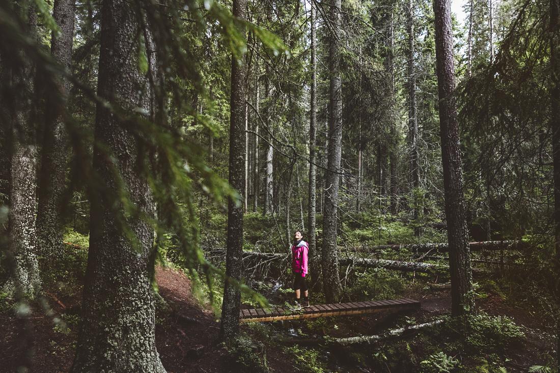 Höga kusten e l'abbraccio della natura