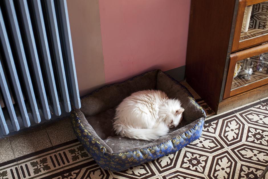 abitazione di un architetto, gatto bianco che dorme, ring and smile