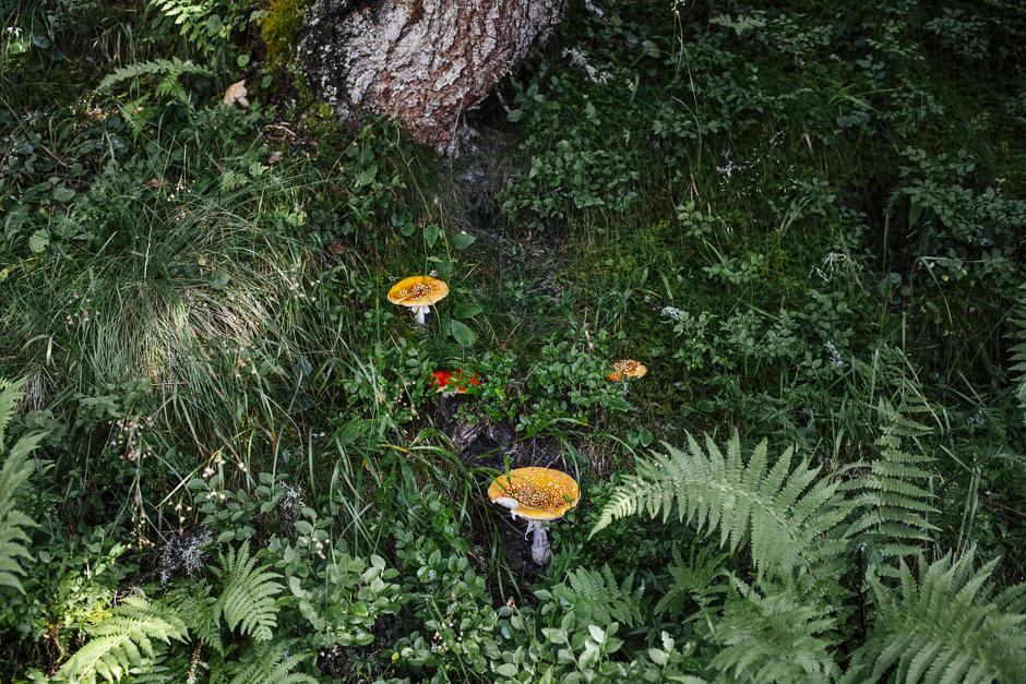 funghi nel bosco in Austria