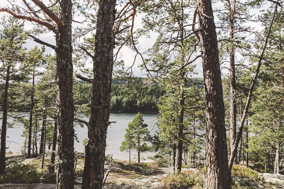 parco nazionale Skuleskogen, Höga kusten e l'abbraccio della natura